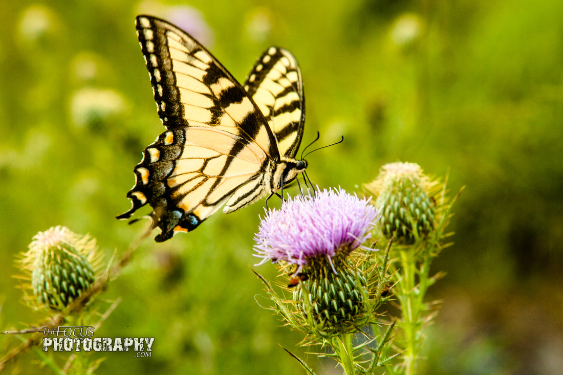 Battlefield, gettysburg, pennsylvania, tourist, civil, war, park, butterfly, flower