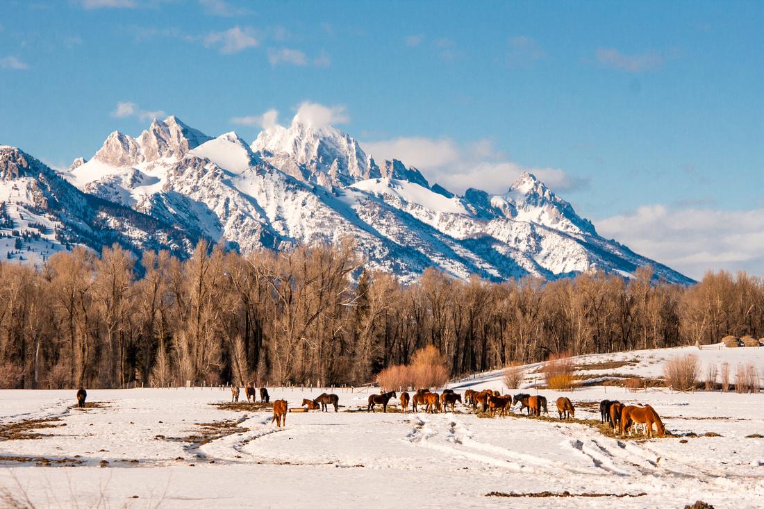 Jackson Wyoming Mountain